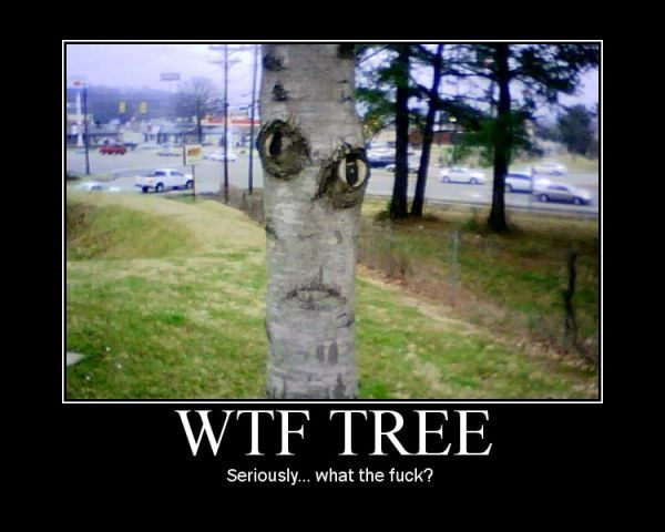 Tree says what?