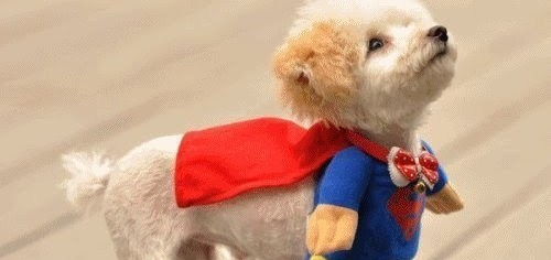 Super dog is here to save you.