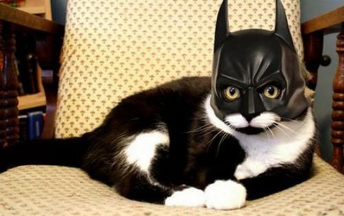 Look! On the chair! It's Batman cat.