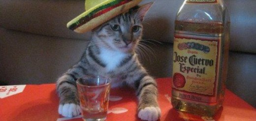 Who needs a shot of tequila?
