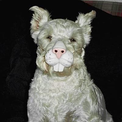 Rabbit Dog!