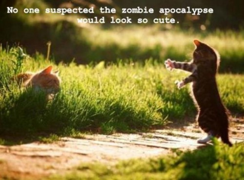Cat Zombie