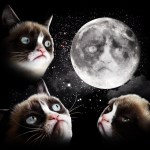 3 Grumpy Cat Moon