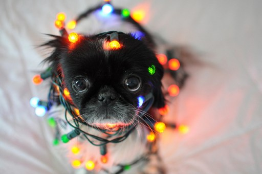 Christmas Lights Puppy