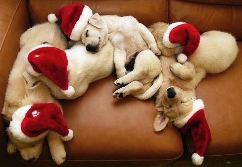 Sleeping Christmas Puppies