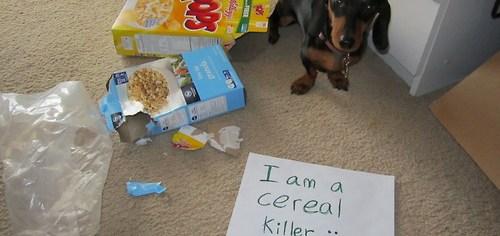 cute cereal killer