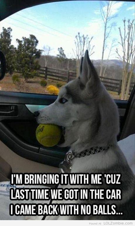 Dog Lost Balls