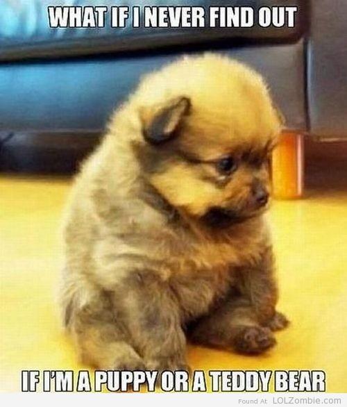 Bear Puppy