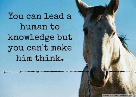 Horses Think