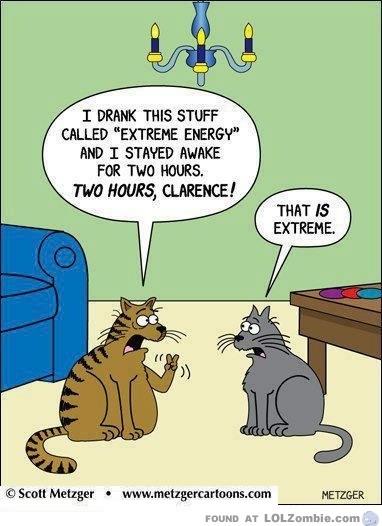 cat energy drink