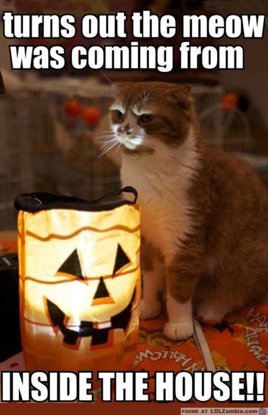 Halloween Meow