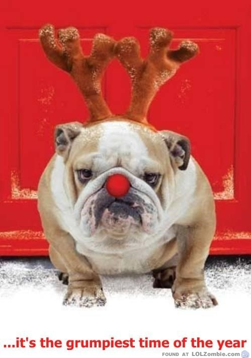 Grumpy Christmas Dog