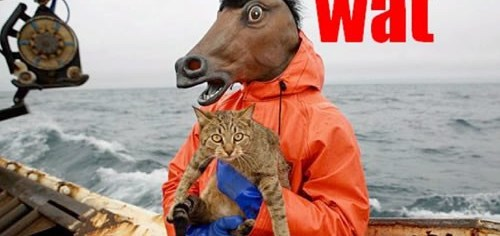 Horse Man Holding Cat