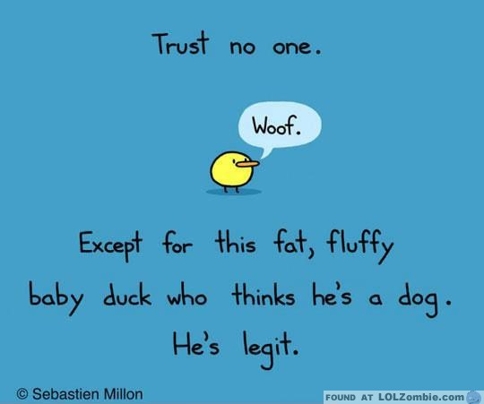 Fat Fluffy Baby Duck