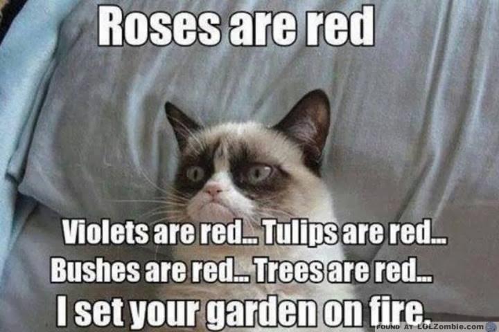Grumpy Cat Fire