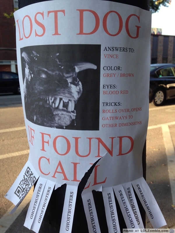 Lost Ghost Dog