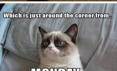 Friday Cat Dog