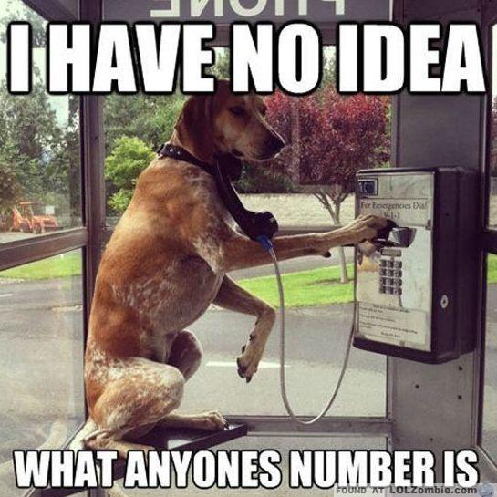 Dog on Phone