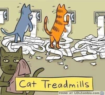 cat treadmill