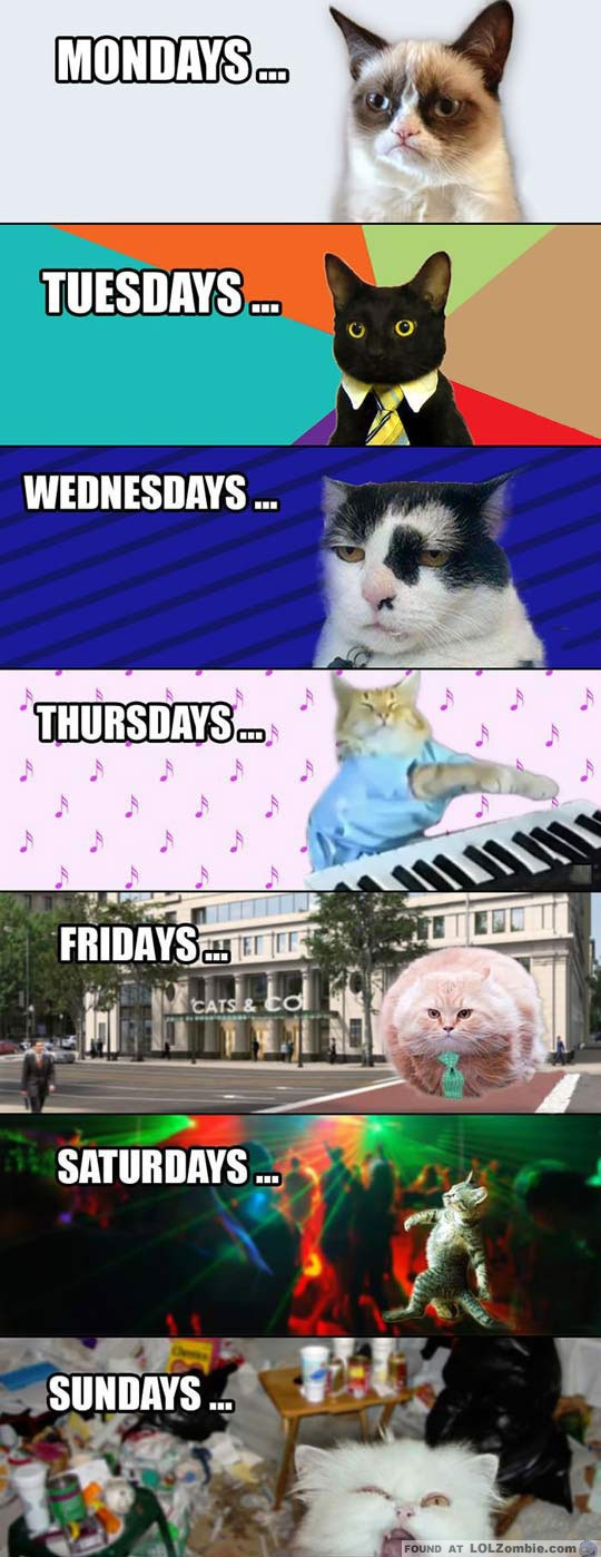 weekly cats