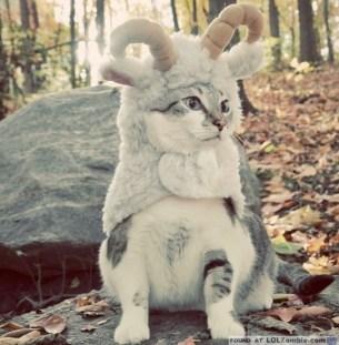 Wild fun with ram cat.