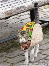 Mmmm Taco Cat. Looks so yummy.