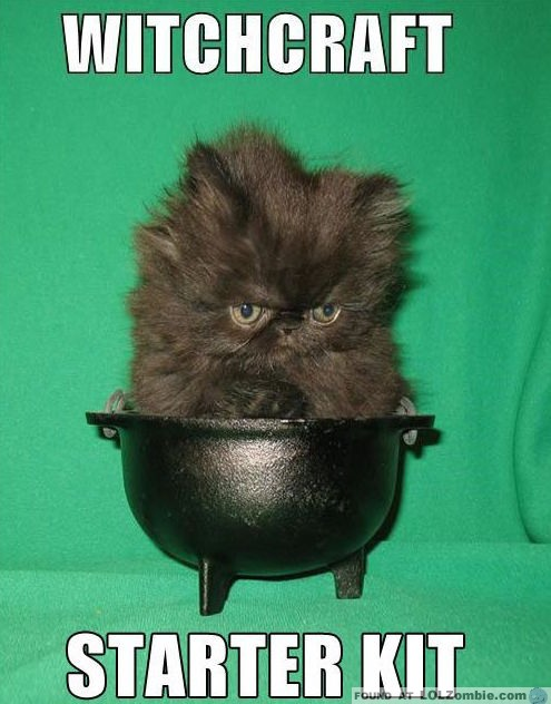 witchcraft kitten