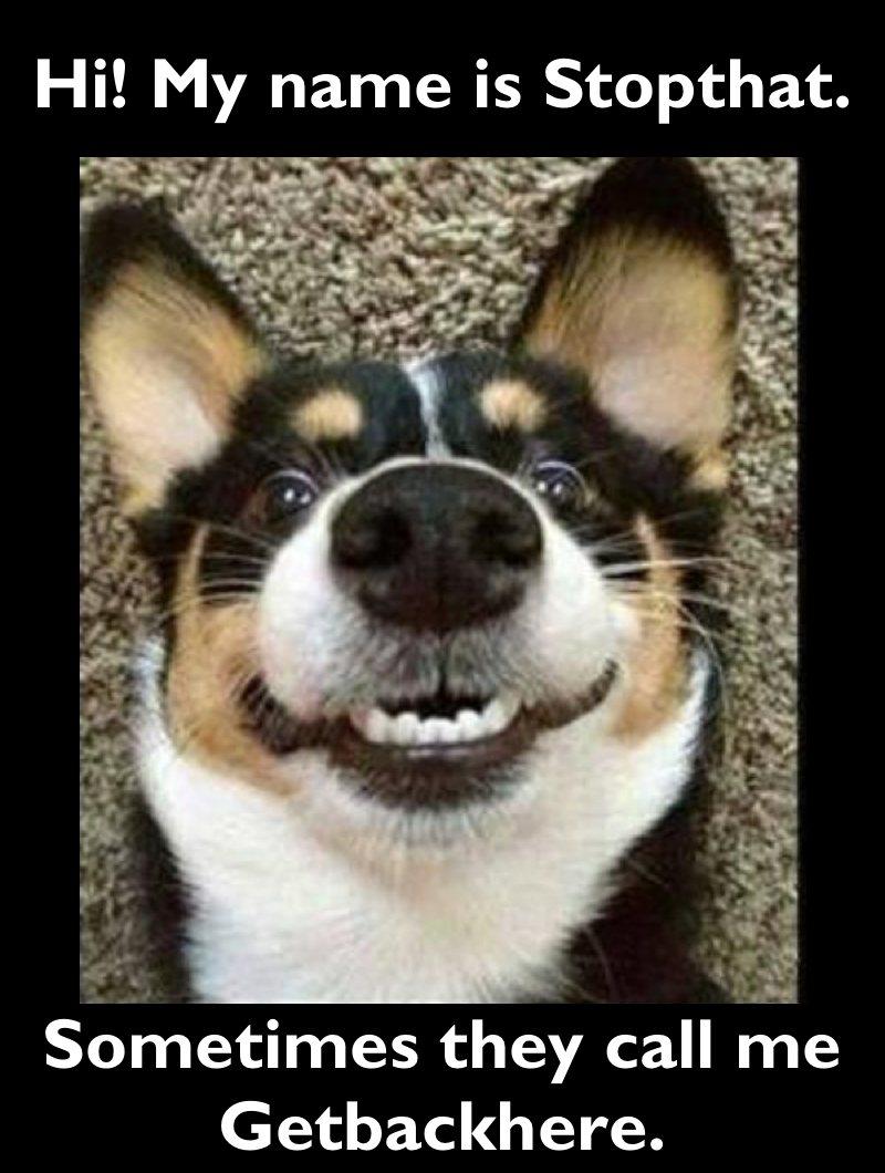 Happy Doggie