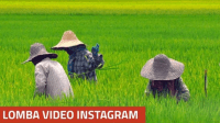 Lomba Video Instagram Kementerian Pertanian