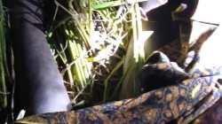 Penemuan Sosok Mayat di Desa Bujak Hebohkan Warga