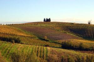 colline_toscane.jpg