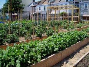 Urban Farm_1