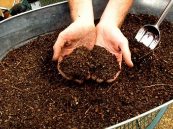 earthworms-compost