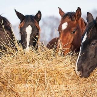 Lombricoltura, se hai cavalli ecco come ottenere reddito dal letame