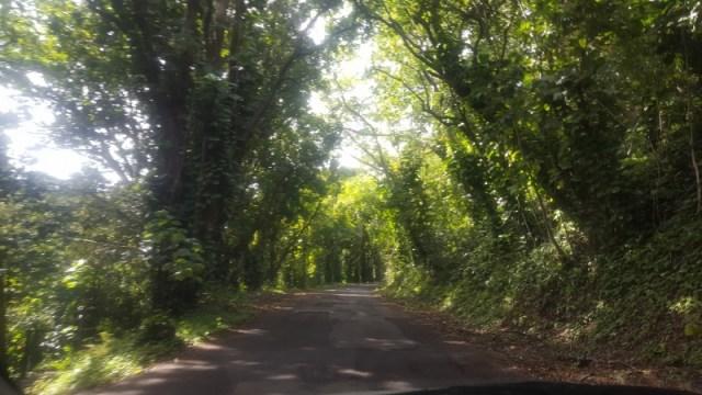 ハワイでおすすめのドライブコース