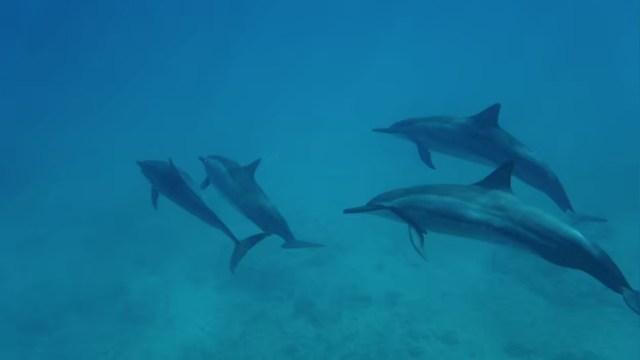 野生のイルカと泳ぐおすすめツアー