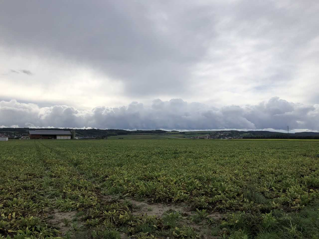 Les betteraviers de la Plaine de l'Orbe face au virus de la jaunisse