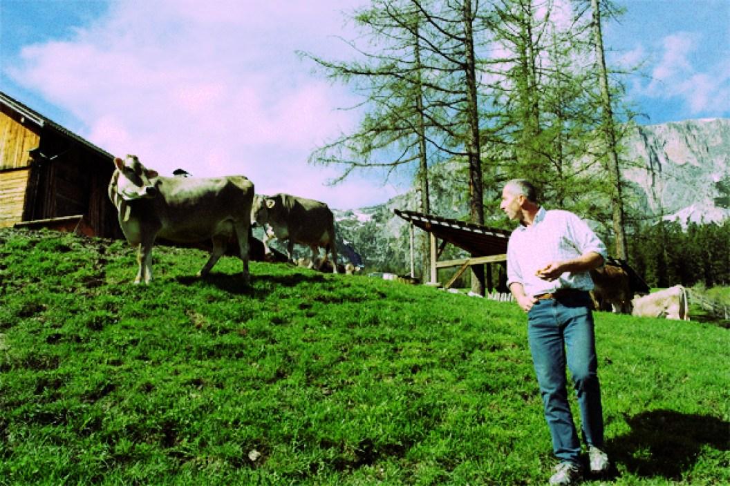 Michele und seine Kühen