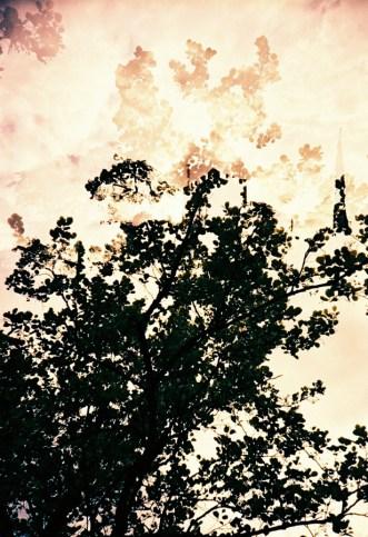 """Doppelbelichtung Mammutbaum entlang der """"Promenade der Poesie"""""""