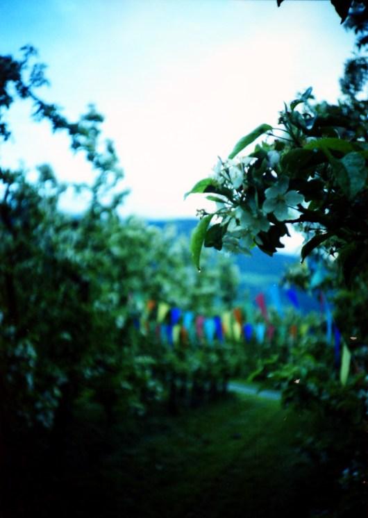 Apfel-Party im Vinschgau