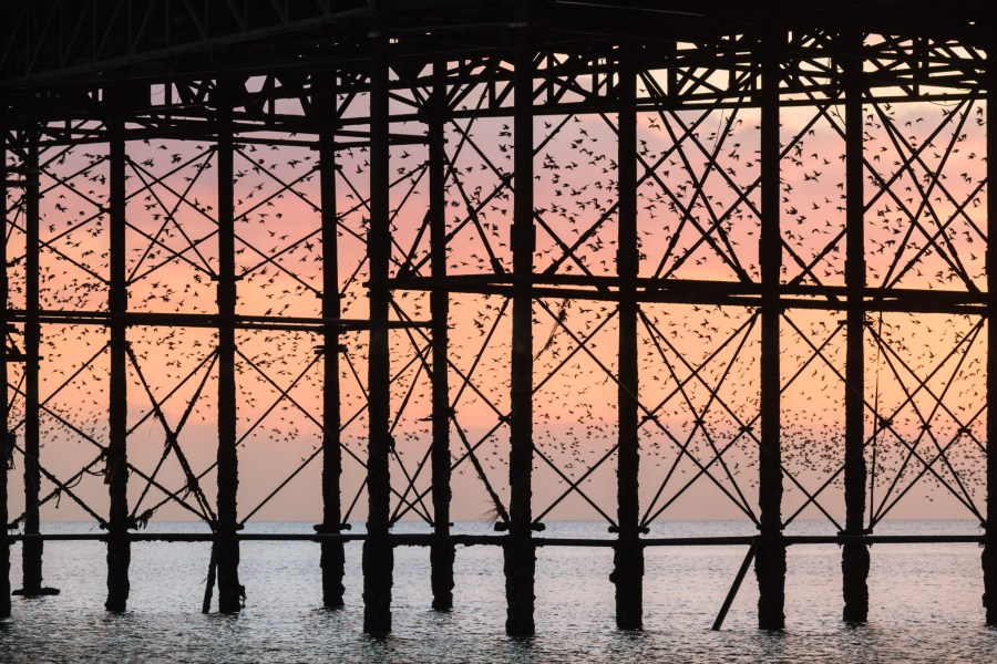 Brighton Starling Murmuration February 2015