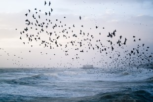 Brighton starling murmuration and West Pier by Kevin Meredith