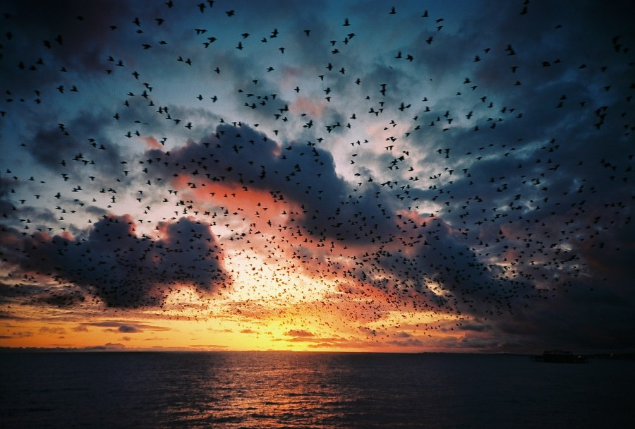 Brighton starling murmuration shot on Lomo LCA by Kevin Meredith