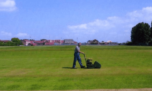 Is mowing the lawn destined to become a thing of the past?