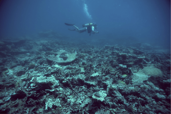 Diving on the Chagos archipelago. Image copyright Dan Bayley.