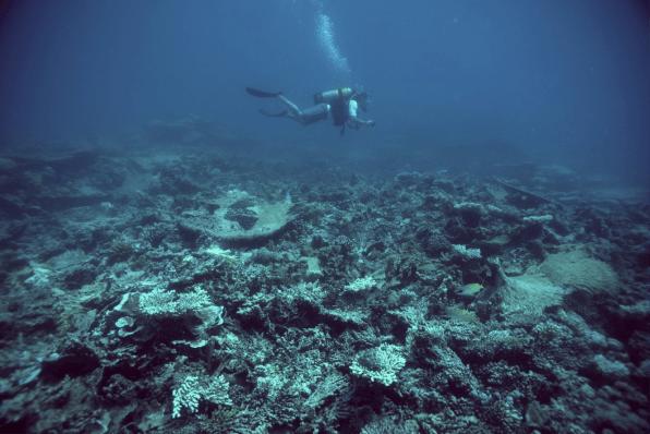 Diving on the Chagos archipelago. Image copyright Dan Bayley.