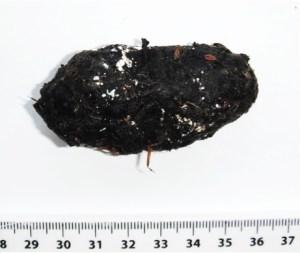 A modern barn owl pellet