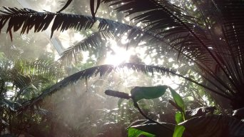 Kew Gardens for Biodiversity Week. Image by Dan Nicholson.