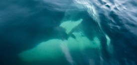 The orca swims right underneath our boat. Photograph by Richard Clark-Wilson.
