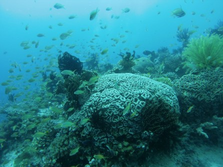 Healthy reefs in the Philippines. Image copyright Dan Bayley